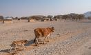 Как будут помогать фермерам, страдающим от засухи