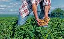 Почему у сельского хозяйства больше рисков, чем шансов в период пандемии