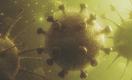 Вирус SARS-CoV-2 как «великий уравнитель»