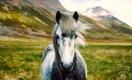Конь — это и друг, и транспорт, и еда