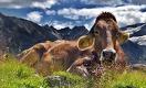 Почему сельское хозяйство в Казахстане неэффективно?