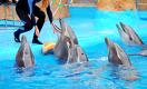 В Казахстане запретят дельфинарии