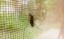 Как перестать проигрывать в борьбе с малярией