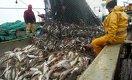 Рыболовству Балхаша грозит банкротство