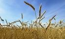 Мода на здоровье. Как казахстанские фермеры выращивают органическую продукцию для Запада
