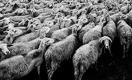 Останутся ли без субсидий казахстанские животноводы?