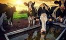 Больше скота, хорошего и разного: как в Казахстане повысить поголовье тёлок