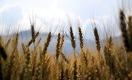 Налог по Чингисхану. Поддержит ли аграриев фискальная реформа?
