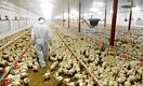 Сколько зарабатывают казахстанские бизнесмены Естай, Сейсембаев и Толкупаев на птицефабриках