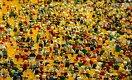 Численность населения Китая перестала расти. Это хорошо или плохо?