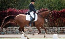 Денежный спорт: зачем в Казахстане возрождают конные состязания