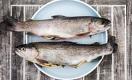 Чиновники уверяют: производство рыбы в Казахстане вырастет в 30 раз за десятилетие