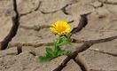 Какие продукты могут исчезнуть из-за изменений климата в ближайшие десятилетия