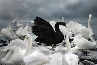 One Of These 3 Black Swans Will Likely Trigger A Global Recession By End Of 2018