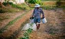 Как помочь мелким фермерам Африки накормить мир