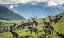 Как в Восточном Казахстане развивают туристическую отрасль