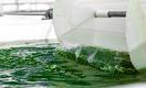 Домашний суперфуд. Как в Казахстане выращивают и продают органическую спирулину