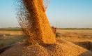 Казахстан намерен нарастить экспорт зерна в Китай