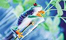 Геном коронавируса расшифрован за несколько недель. В чём ещё преуспела биология?