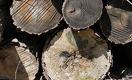 До 4 млн тенге придется заплатить за незаконно вырубленное дерево